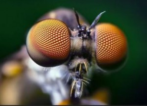 insects_eye