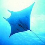 Manta Ray goes beyond air