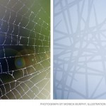 Spider Web Glass